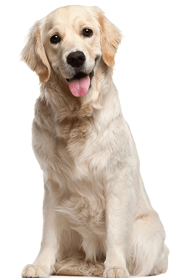 barf yum dieta perros