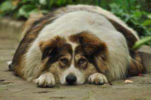 receta baja en grasa para perros